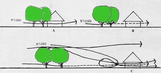 tree-ปลูกต้นไม้ในบ้าน-1